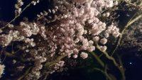 高梨城の夜桜